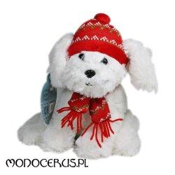 Pies Kacper w czapce i szaliku