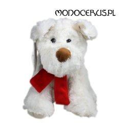 Pies Ricco biały z kokardą 23 cm