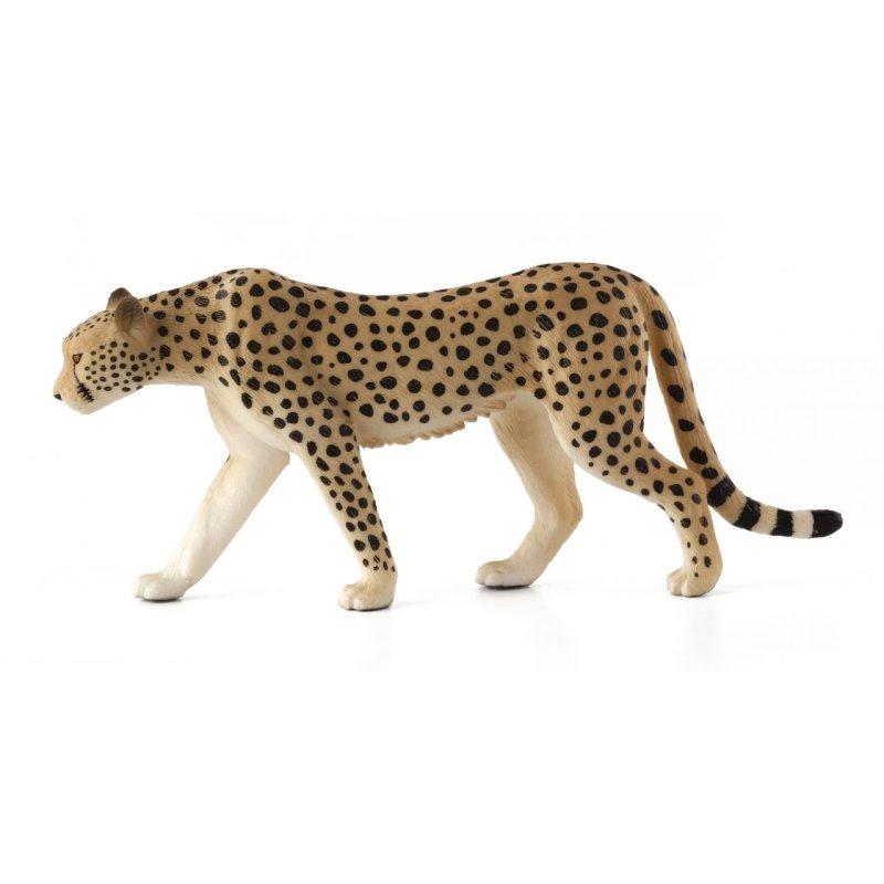 Mojo 387197 - Gepard samiec