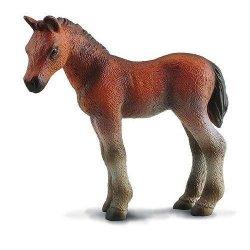 CollectA 88244 - Koń pełnej krwi źrebię stojące