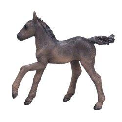 Mojo 381015 - Koń arabski źrebię kare