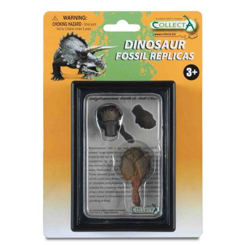 CollectA 89287 - Ankylozaur ząb i maczuga replika gablota